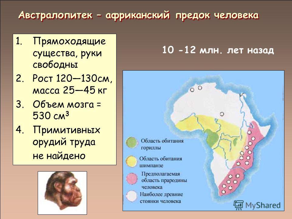 10 -12 млн. лет назад Австралопитек – африканский предок человека 1.Прямоходящие существа, руки свободны 2.Рост 120130см, масса 2545 кг 3.Объем мозга = 530 см 3 4.Примитивных орудий труда не найдено