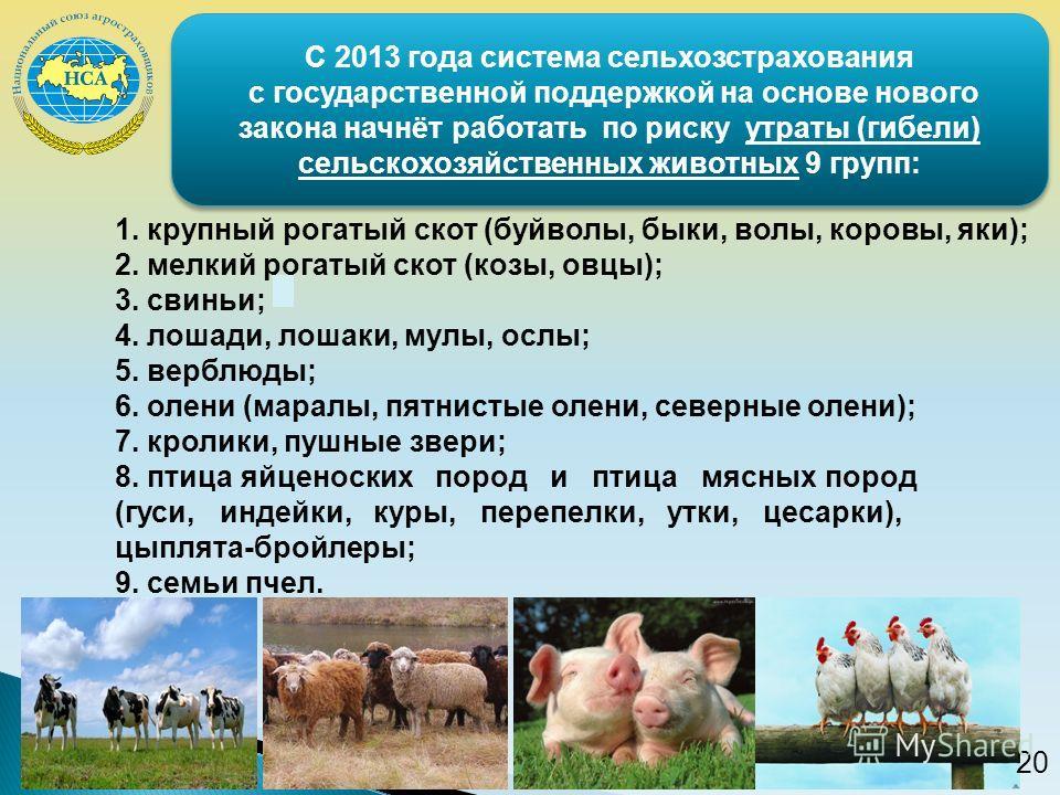1. крупный рогатый скот (буйволы, быки, волы, коровы, яки); 2. мелкий рогатый скот (козы, овцы); 3. свиньи; 4. лошади, лошаки, мулы, ослы; 5. верблюды; 6. олени (маралы, пятнистые олени, северные олени); 7. кролики, пушные звери; 8. птица яйценоских