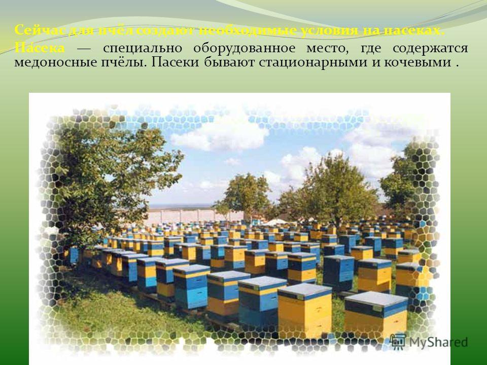 Сейчас для пчёл создают необходимые условия на пасеках. Па́сека специально оборудованное место, где содержатся медоносные пчёлы. Пасеки бывают стационарными и кочевыми.