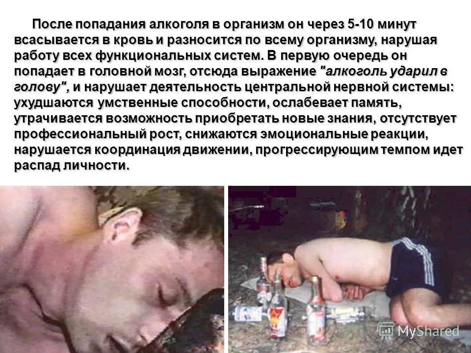 После попадания алкоголя в организм он через 5-10 минут всасывается в кровь и разносится по всему организму, нарушая работу всех функциональных систем. В первую очередь он попадает в головной мозг, отсюда выражение