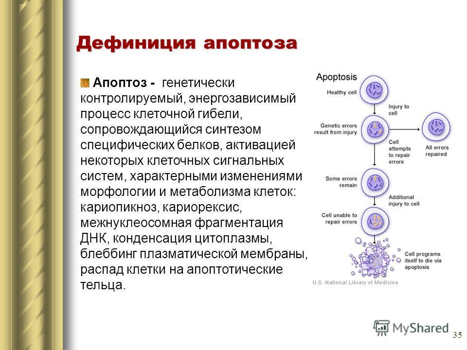 35 Апоптоз - генетически контролируемый, энергозависимый процесс клеточной гибели, сопровождающийся синтезом специфических белков, активацией некоторых клеточных сигнальных систем, характерными изменениями морфологии и метаболизма клеток: кариопикноз