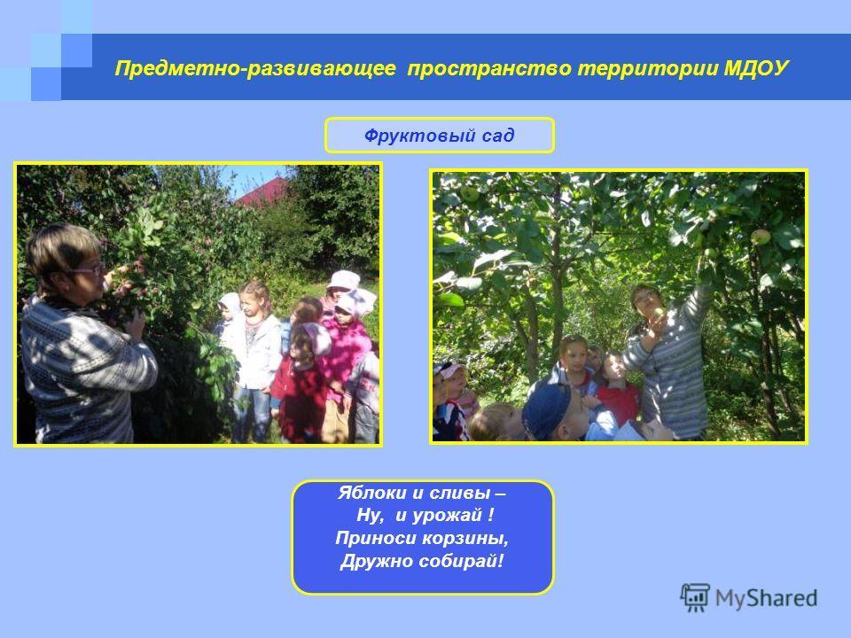Предметно-развивающее пространство территории МДОУ Фруктовый сад Яблоки и сливы – Ну, и урожай ! Приноси корзины, Дружно собирай!