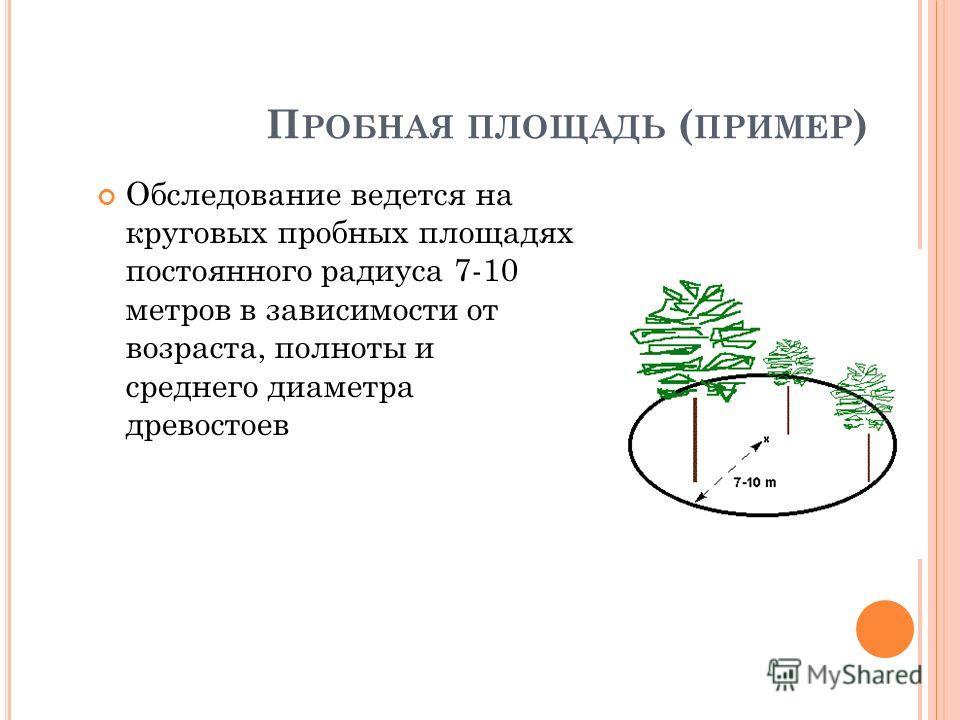 П РОБНАЯ ПЛОЩАДЬ ( ПРИМЕР ) Обследование ведется на круговых пробных площадях постоянного радиуса 7-10 метров в зависимости от возраста, полноты и среднего диаметра древостоев 24