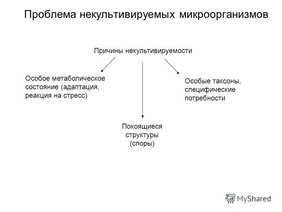 Проблема некультивируемых микроорганизмов Особое метаболическое состояние (адаптация, реакция на стресс) Особые таксоны, специфические потребности Покоящиеся структуры (споры) Причины некультивируемости