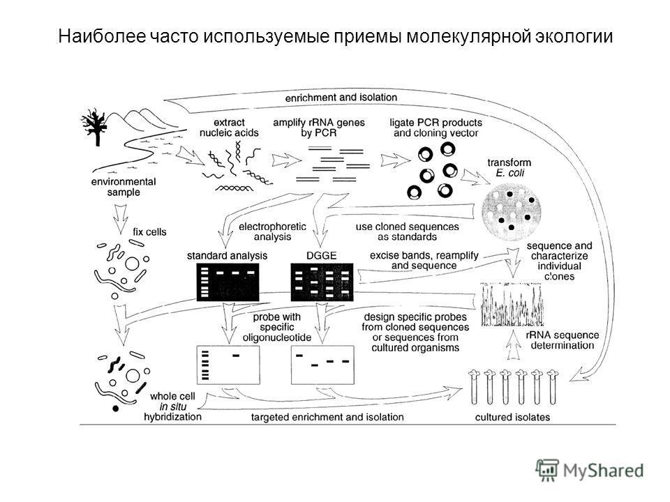 Наиболее часто используемые приемы молекулярной экологии