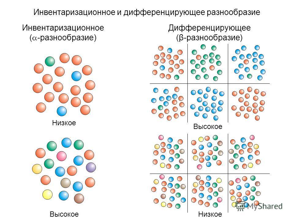 Инвентаризационное и дифференцирующее разнообразие Инвентаризационное ( -разнообразие) Дифференцирующее (β-разнообразие) Низкое Высокое Низкое