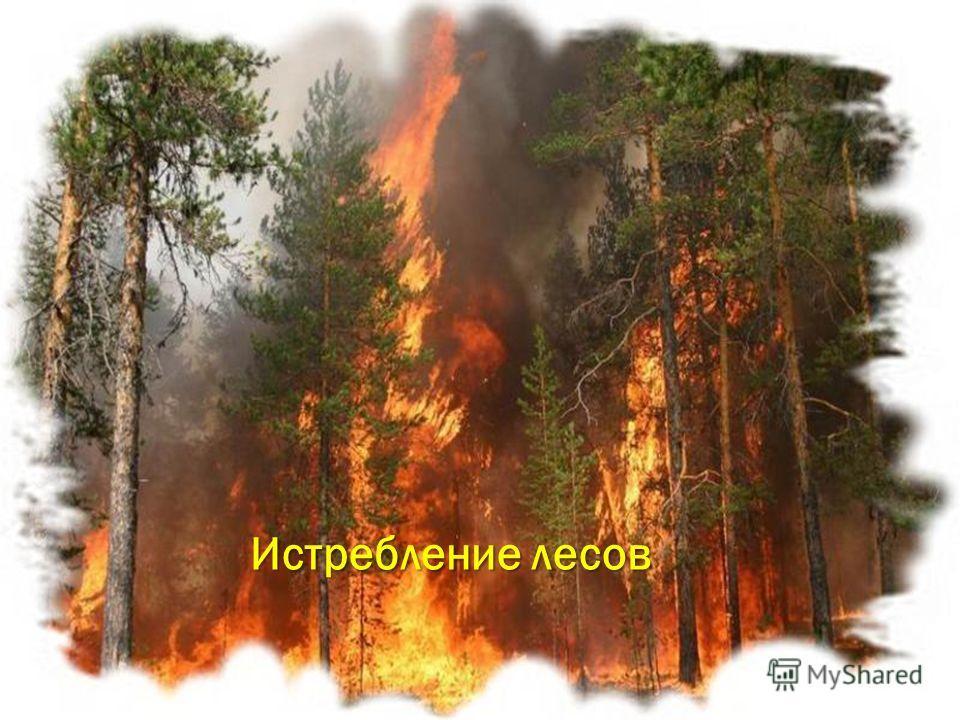 Истребление животных Истребление лесов