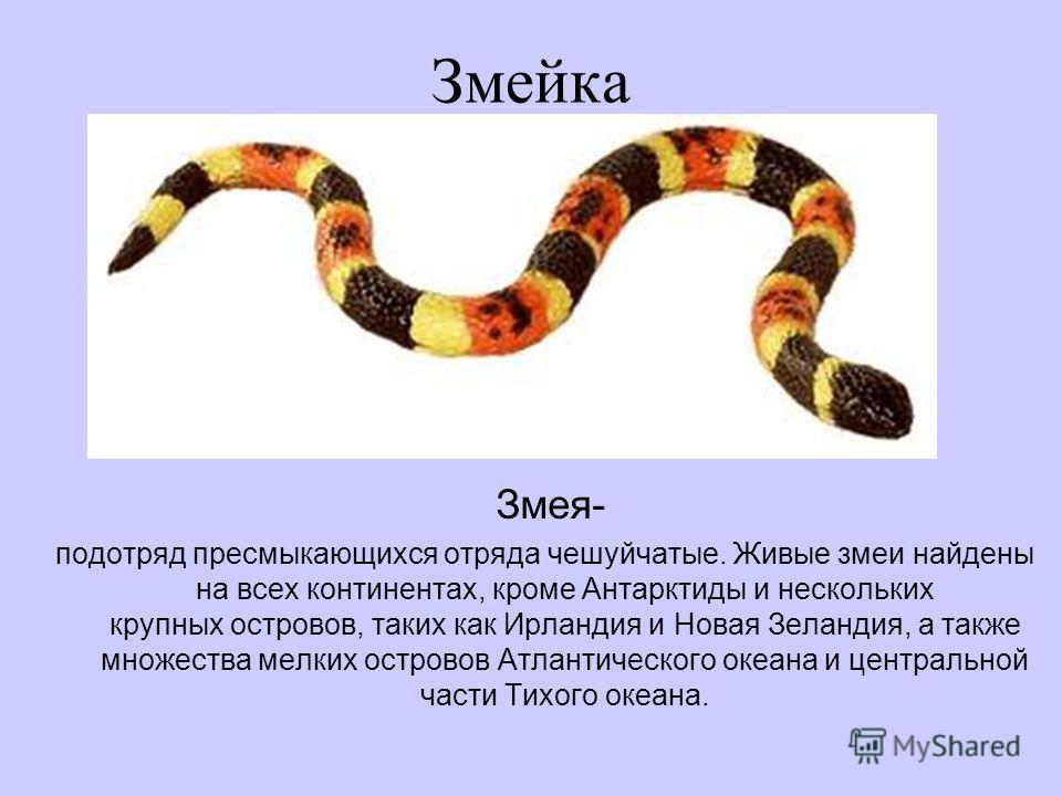 Змейка Змея- подотряд пресмыкающихся отряда чешуйчатые. Живые змеи найдены на всех континентах, кроме Антарктиды и нескольких крупных островов, таких как Ирландия и Новая Зеландия, а также множества мелких островов Атлантического океана и центральной