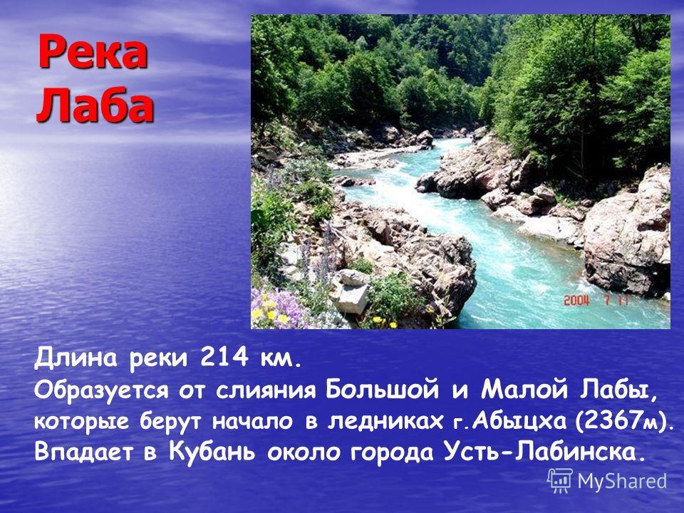 Река Лаба Длина реки 214 км. Образуется от слияния Большой и Малой Лабы, которые берут начало в ледниках г. Абыцха ( 2367 м ). Впадает в Кубань около города Усть-Лабинска.