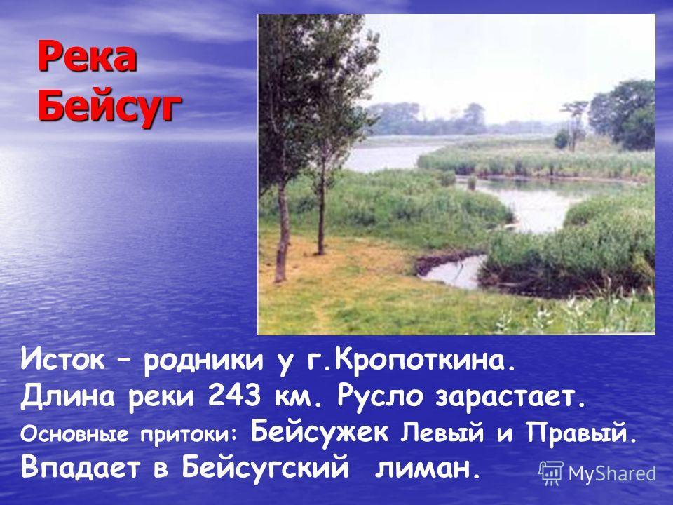 Река Бейсуг Исток – родники у г.Кропоткина. Длина реки 243 км. Русло зарастает. Основные притоки: Бейсужек Левый и Правый. Впадает в Бейсугский лиман.