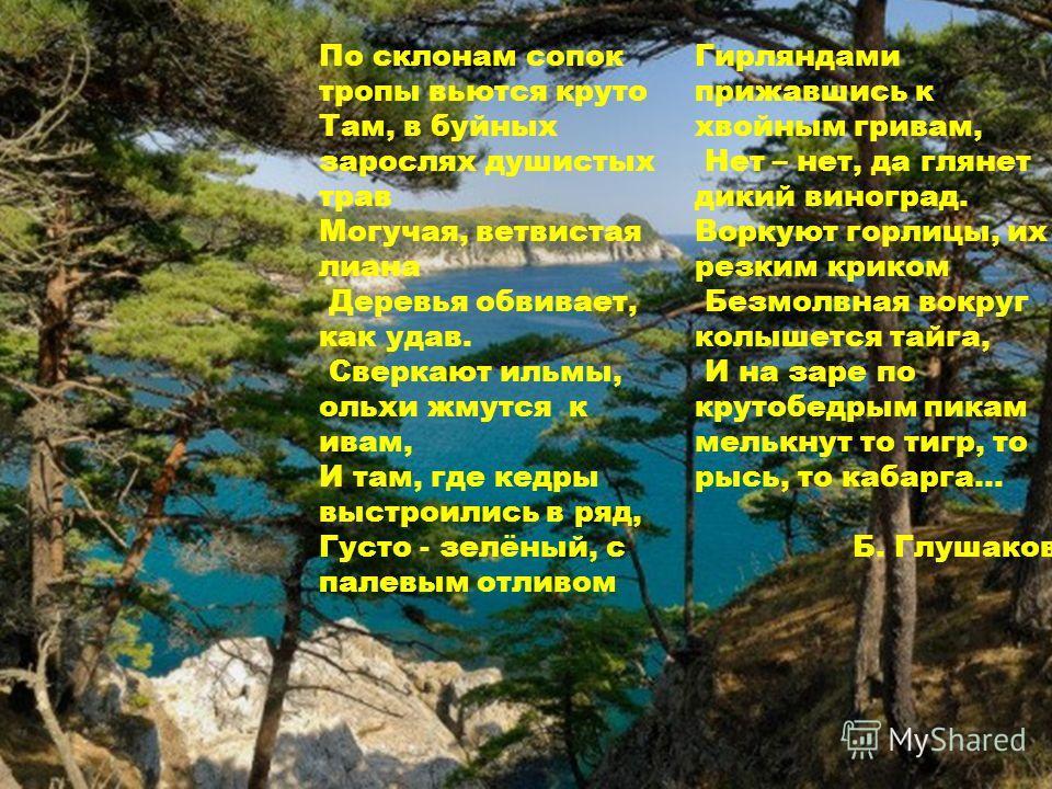По склонам сопок тропы вьются круто Там, в буйных зарослях душистых трав Могучая, ветвистая лиана Деревья обвивает, как удав. Сверкают ильмы, ольхи жмутся к ивам, И там, где кедры выстроились в ряд, Густо - зелёный, с палевым отливом Гирляндами прижа