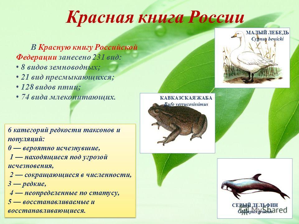 В Красную книгу Российской Федерации занесено 231 вид: 8 видов земноводных; 21 вид пресмыкающихся; 128 видов птиц; 74 вида млекопитающих. 6 категорий редкости таксонов и популяций: 0 вероятно исчезнувшие, 1 находящиеся под угрозой исчезновения, 2 сок