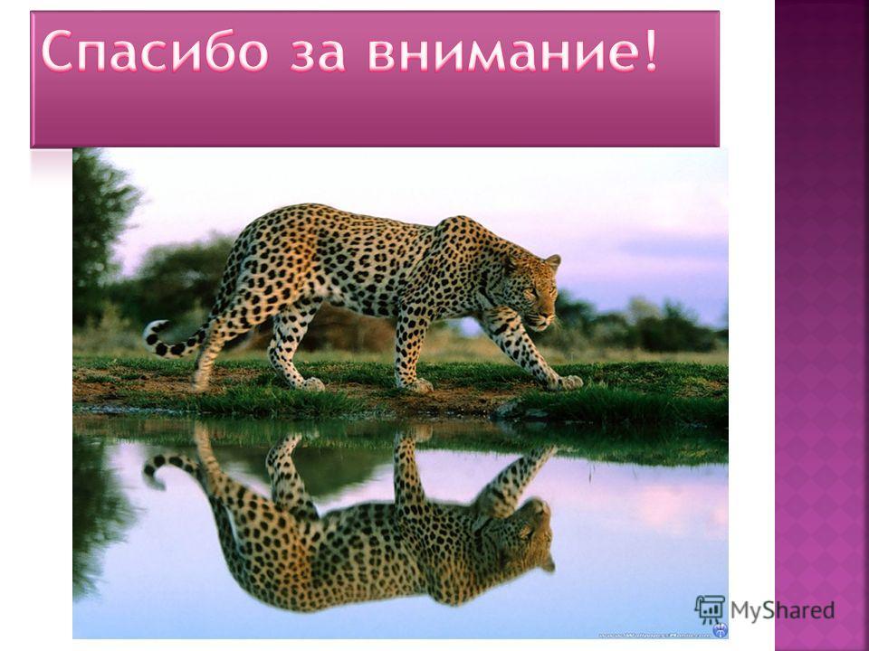 А сейчас мы покажем видео Петрозаводск- это мой город