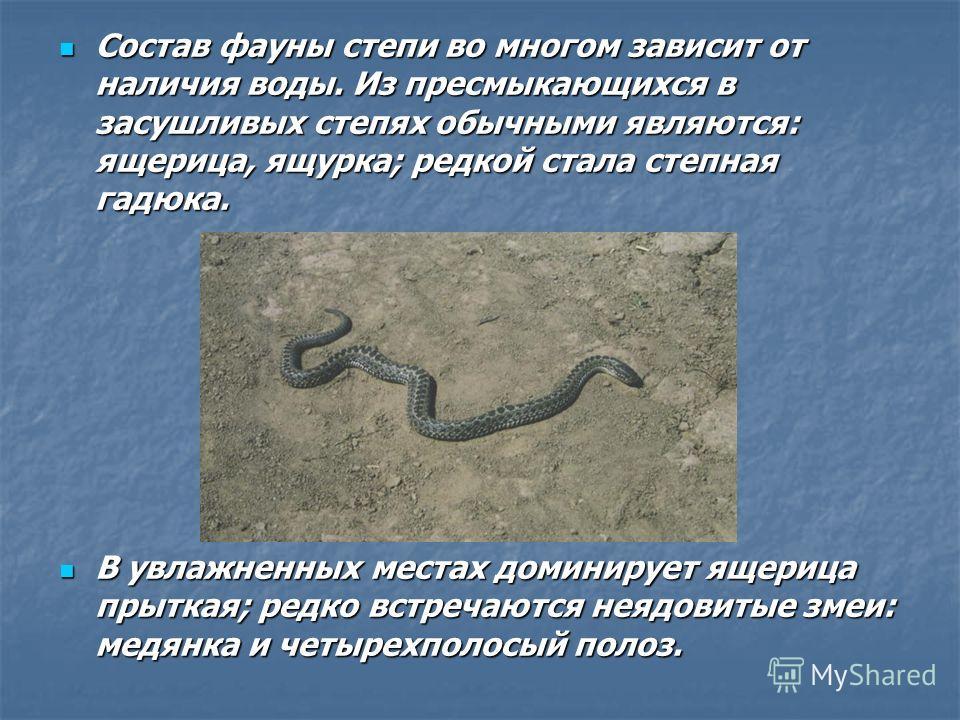 Состав фауны степи во многом зависит от наличия воды. Из пресмыкающихся в засушливых степях обычными являются: ящерица, ящурка; редкой стала степная гадюка. Состав фауны степи во многом зависит от наличия воды. Из пресмыкающихся в засушливых степях о