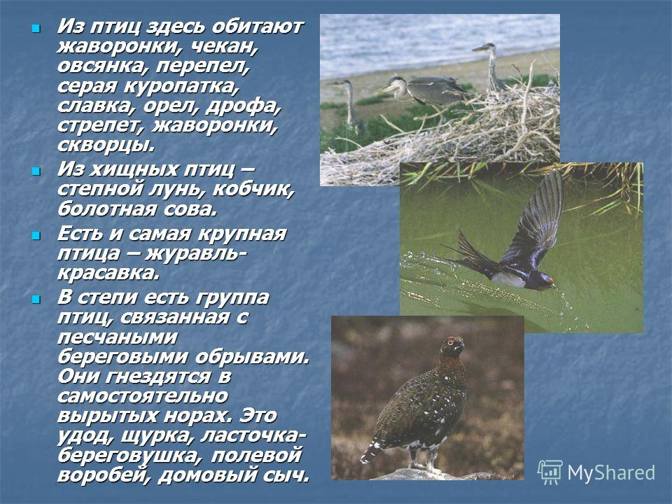 Из птиц здесь обитают жаворонки, чекан, овсянка, перепел, серая куропатка, славка, орел, дрофа, стрепет, жаворонки, скворцы. Из птиц здесь обитают жаворонки, чекан, овсянка, перепел, серая куропатка, славка, орел, дрофа, стрепет, жаворонки, скворцы.