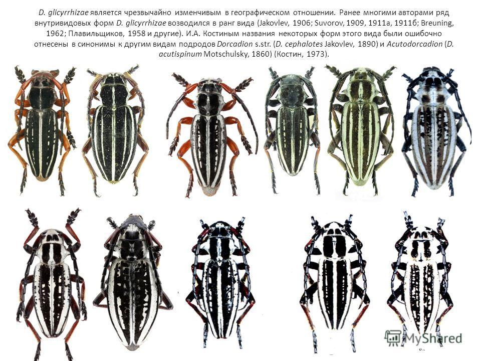 D. glicyrrhizae является чрезвычайно изменчивым в географическом отношении. Ранее многими авторами ряд внутривидовых форм D. glicyrrhizae возводился в ранг вида (Jakovlev, 1906; Suvorov, 1909, 1911а, 1911б; Breuning, 1962; Плавильщиков, 1958 и другие