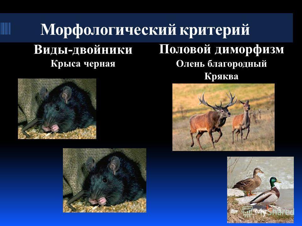 Морфологический критерий Виды-двойники Крыса черная Половой диморфизм Олень благородный Кряква