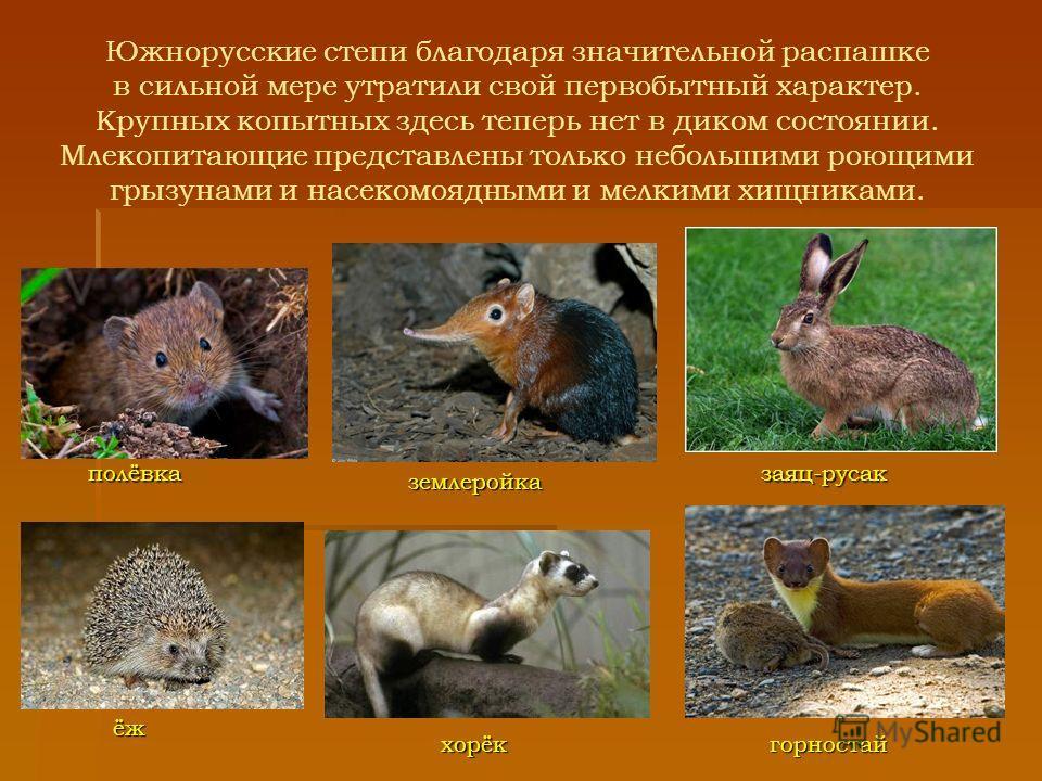 Южнорусские степи благодаря значительной распашке в сильной мере утратили свой первобытный характер. Крупных копытных здесь теперь нет в диком состоянии. Млекопитающие представлены только небольшими роющими грызунами и насекомоядными и мелкими хищник