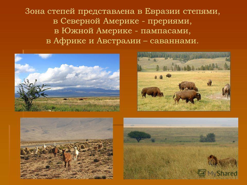 3она степей представлена в Евразии степями, в Северной Америке - прериями, в Южной Америке - пампасами, в Африке и Австралии – саваннами.