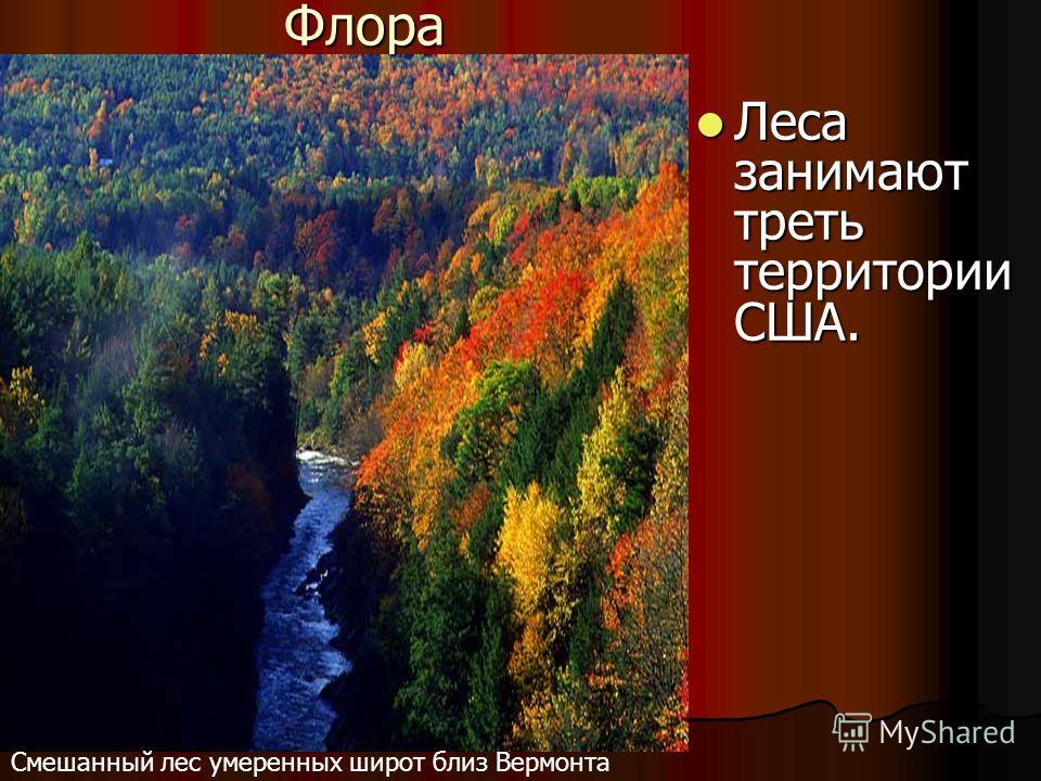 Флора Леса занимают треть территории США. Леса занимают треть территории США. Смешанный лес умеренных широт близ Вермонта