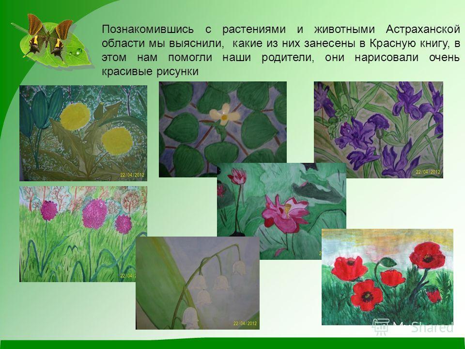 Познакомившись с растениями и животными Астраханской области мы выяснили, какие из них занесены в Красную книгу, в этом нам помогли наши родители, они нарисовали очень красивые рисунки