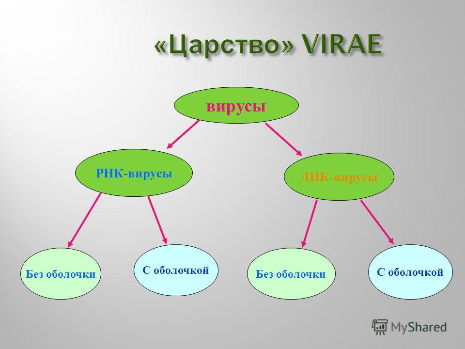 « Царство » VIRAE вирусы РНК - вирусы ДНК - вирусы Без оболочки С оболочкой Без оболочки С оболочкой