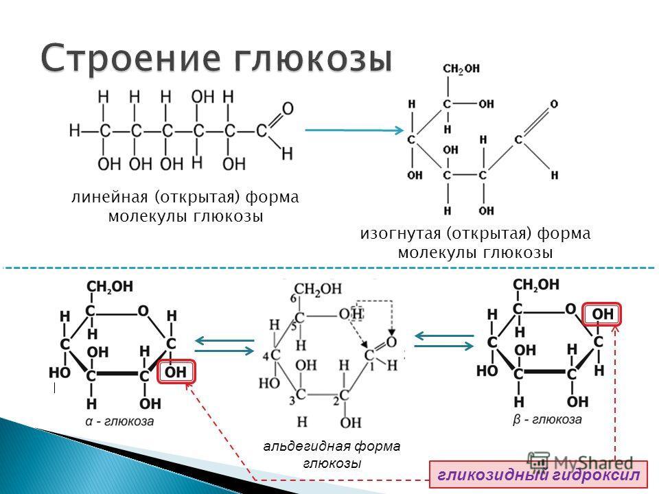 линейная (открытая) форма молекулы глюкозы изогнутая (открытая) форма молекулы глюкозы альдегидная форма глюкозы гликозидный гидроксил