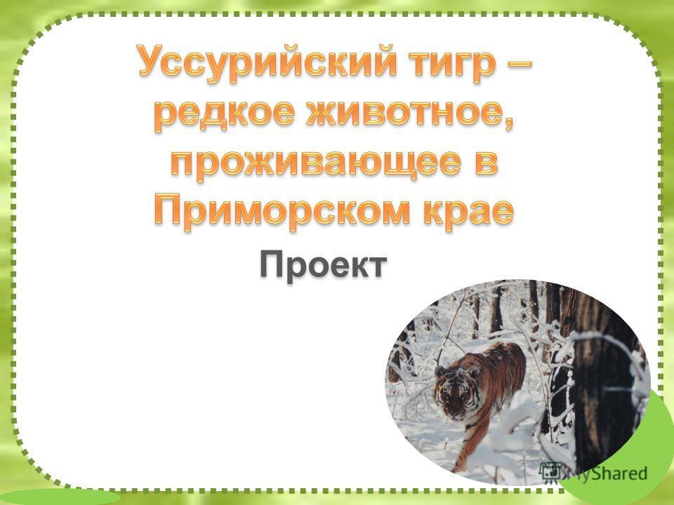 FokinaLida.75@mail.ru Проект