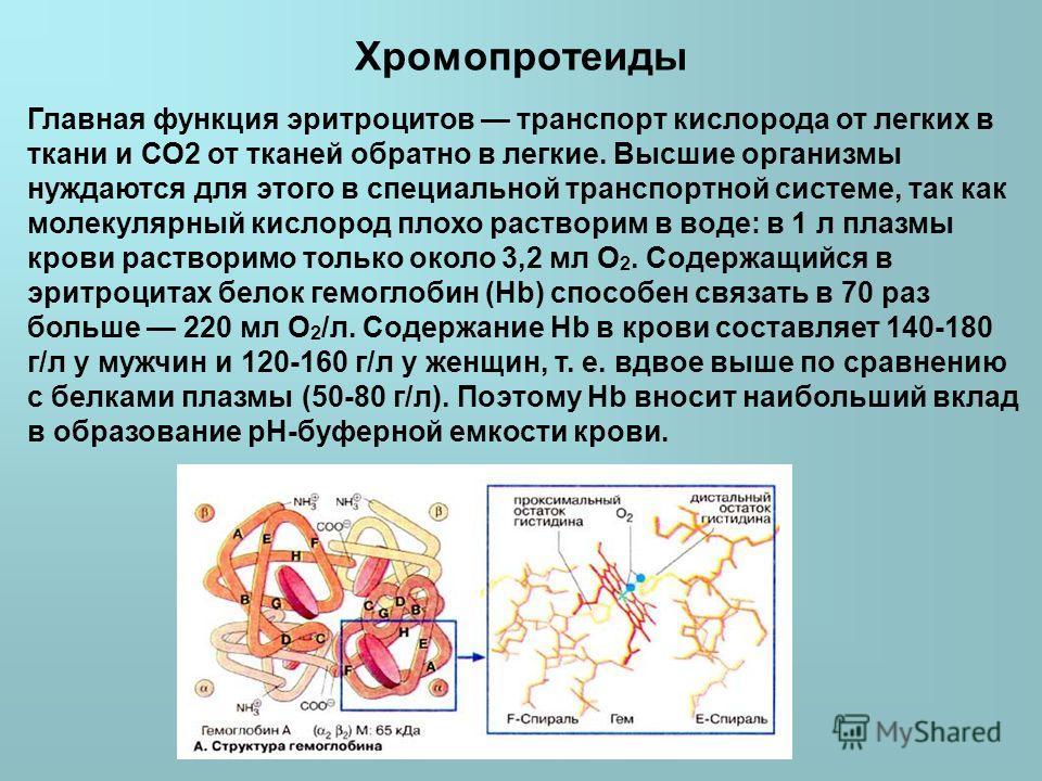 Хромопротеиды Главная функция эритроцитов транспорт кислорода от легких в ткани и СО2 от тканей обратно в легкие. Высшие организмы нуждаются для этого в специальной транспортной системе, так как молекулярный кислород плохо растворим в воде: в 1 л пла