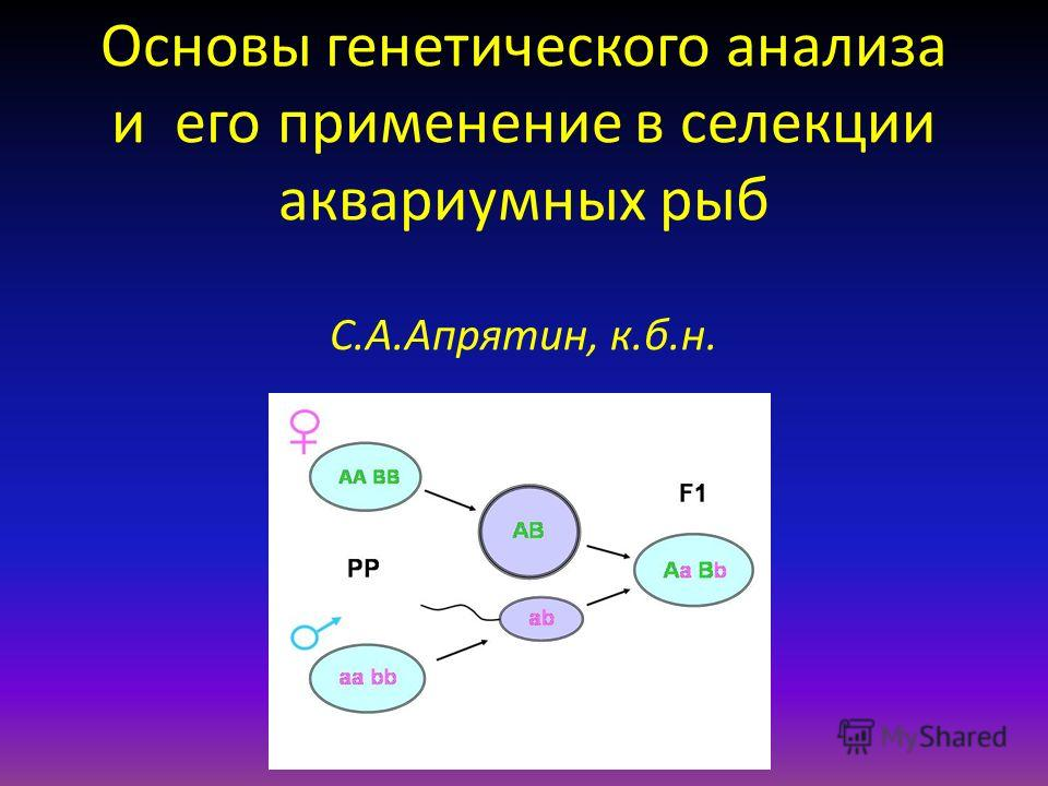 Основы генетического анализа и его применение в селекции аквариумных рыб С.А.Апрятин, к.б.н.