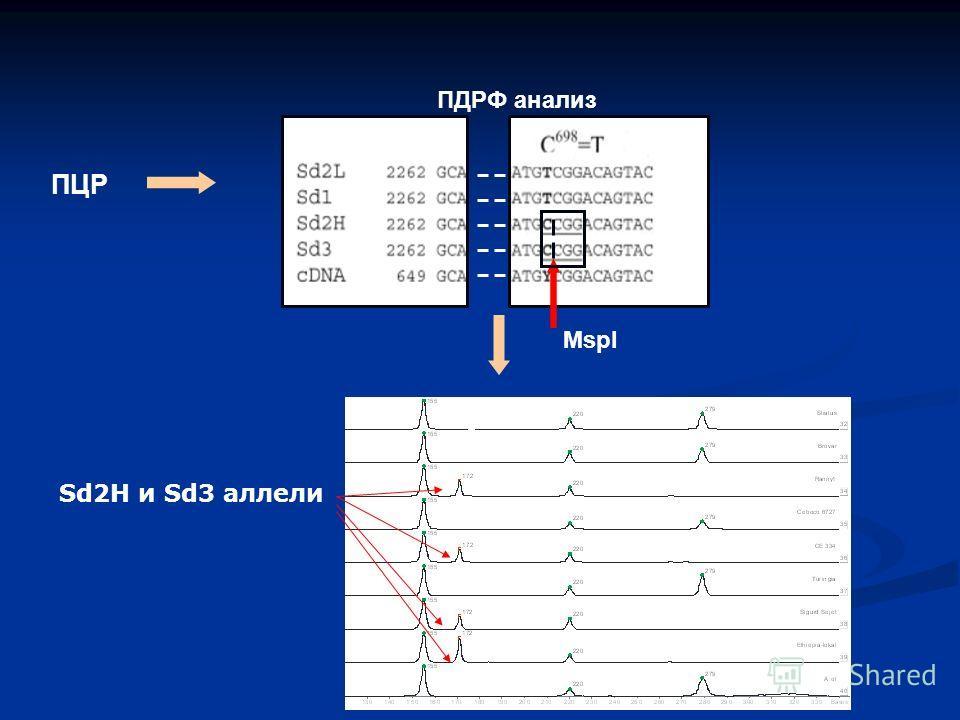 MspI ПЦР ПДРФ анализ Sd2H и Sd3 аллели