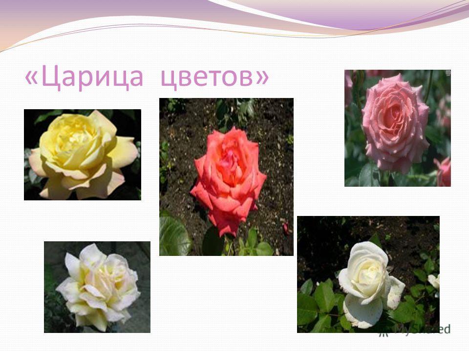 «Царица цветов»