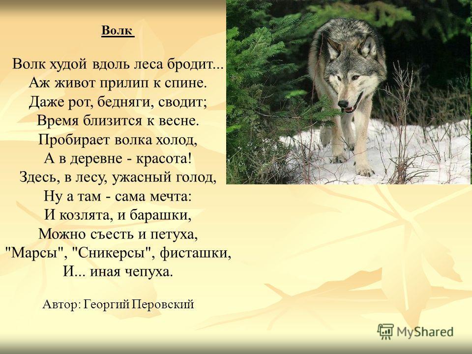 Волк Волк худой вдоль леса бродит... Аж живот прилип к спине. Даже рот, бедняги, сводит; Время близится к весне. Пробирает волка холод, А в деревне - красота! Здесь, в лесу, ужасный голод, Ну а там - сама мечта: И козлята, и барашки, Можно съесть и п