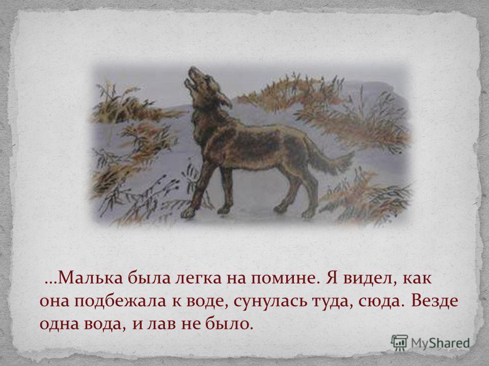 …Малька была легка на помине. Я видел, как она подбежала к воде, сунулась туда, сюда. Везде одна вода, и лав не было.