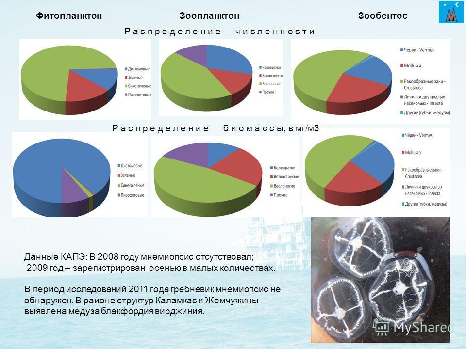 Зоопланктон Данные КАПЭ: В 2008 году мнемиопсис отсутствовал; 2009 год – зарегистрирован осенью в малых количествах. В период исследований 2011 года гребневик мнемиопсис не обнаружен. В районе структур Каламкас и Жемчужины выявлена медуза блакфордия