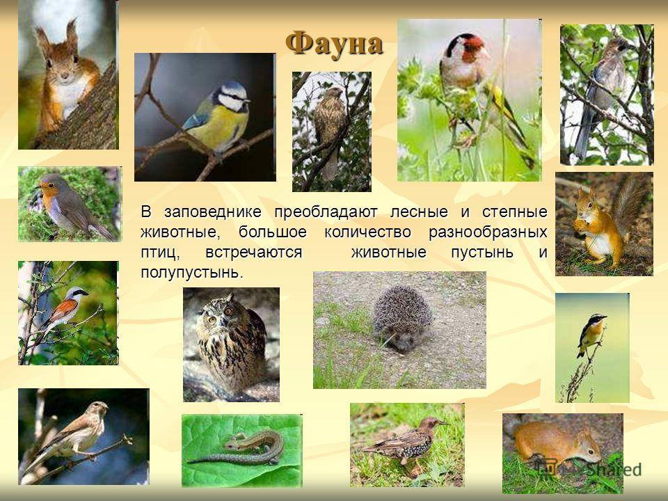 Фауна В заповеднике преобладают лесные и степные животные, большое количество разнообразных птиц, встречаются животные пустынь и полупустынь.