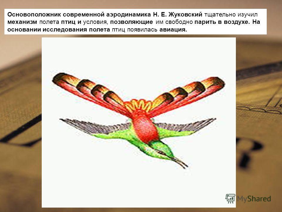 Основоположник современной аэродинамика Н. Е. Жуковский тщательно изучил механизм полета птиц и условия, позволяющие им свободно парить в воздухе. На основании исследования полета птиц появилась авиация.