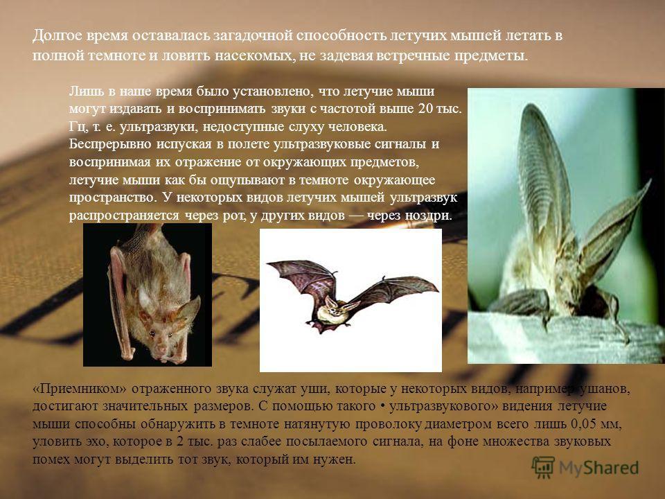 Долгое время оставалась загадочной способность летучих мышей летать в полной темноте и ловить насекомых, не задевая встречные предметы. Лишь в наше время было ус  тановлено, что летучие мыши могут издавать и восприни  мать звуки с частотой выше 20