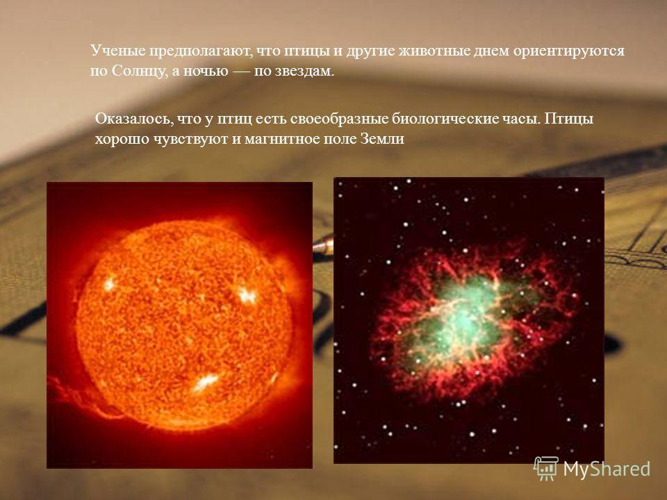 Ученые предполагают, что птицы и другие животные днем ориентируются по Солнцу, а ночью по звездам. Оказалось, что у птиц есть своеобразные биологические часы. Птицы хорошо чувствуют и магнитное поле Земли