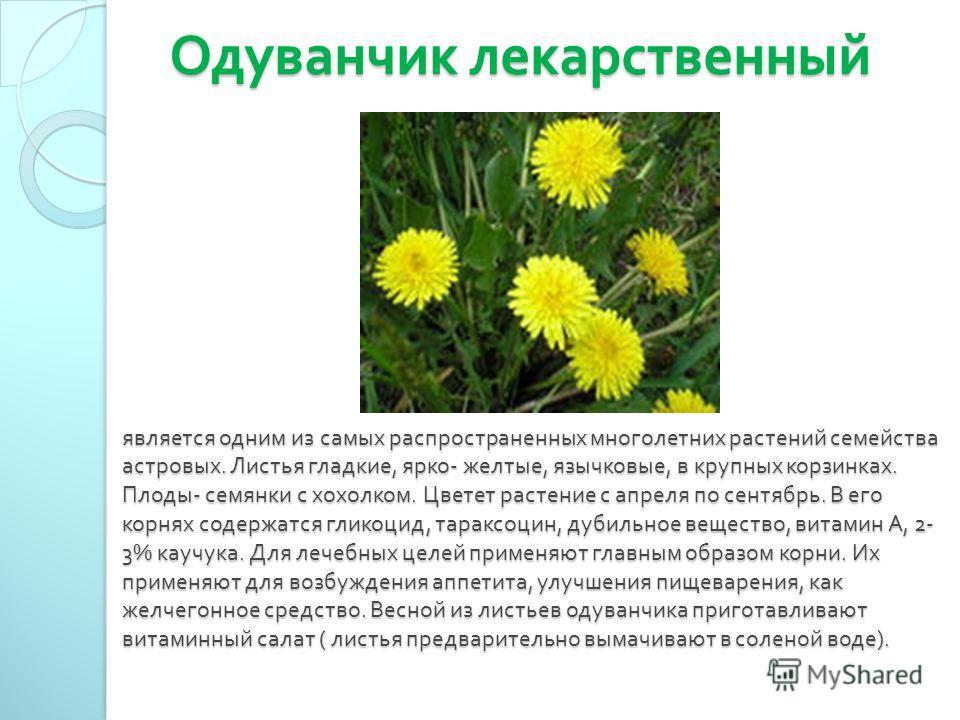 Одуванчик лекарственный является одним из самых распространенных многолетних растений семейства астровых. Листья гладкие, ярко - желтые, язычковые, в крупных корзинках. Плоды - семянки с хохолком. Цветет растение с апреля по сентябрь. В его корнях со