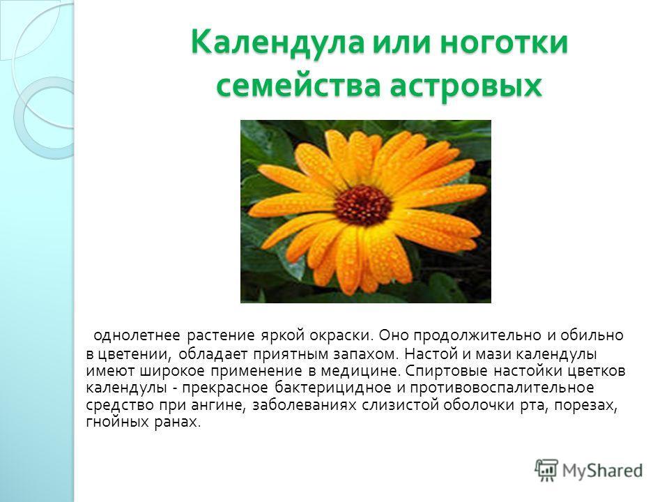 Календула или ноготки семейства астровых однолетнее растение яркой окраски. Оно продолжительно и обильно в цветении, обладает приятным запахом. Настой и мази календулы имеют широкое применение в медицине. Спиртовые настойки цветков календулы - прекра