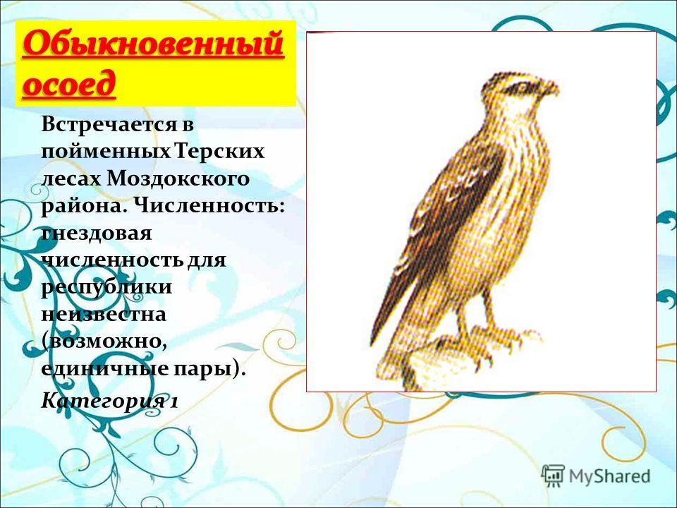 Встречается в пойменных Терских лесах Моздокского района. Численность: гнездовая численность для республики неизвестна (возможно, единичные пары). Категория 1