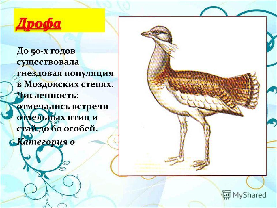 До 50-х годов существовала гнездовая популяция в Моздокских степях. Численность: отмечались встречи отдельных птиц и стай до 60 особей. Категория 0