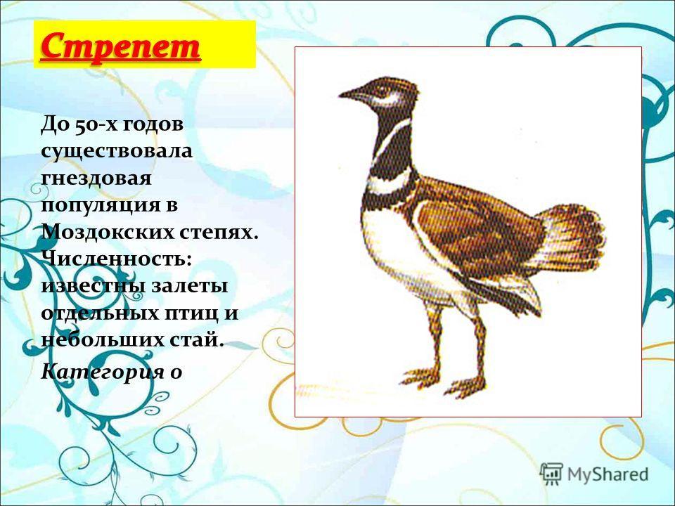 До 50-х годов существовала гнездовая популяция в Моздокских степях. Численность: известны залеты отдельных птиц и небольших стай. Категория 0