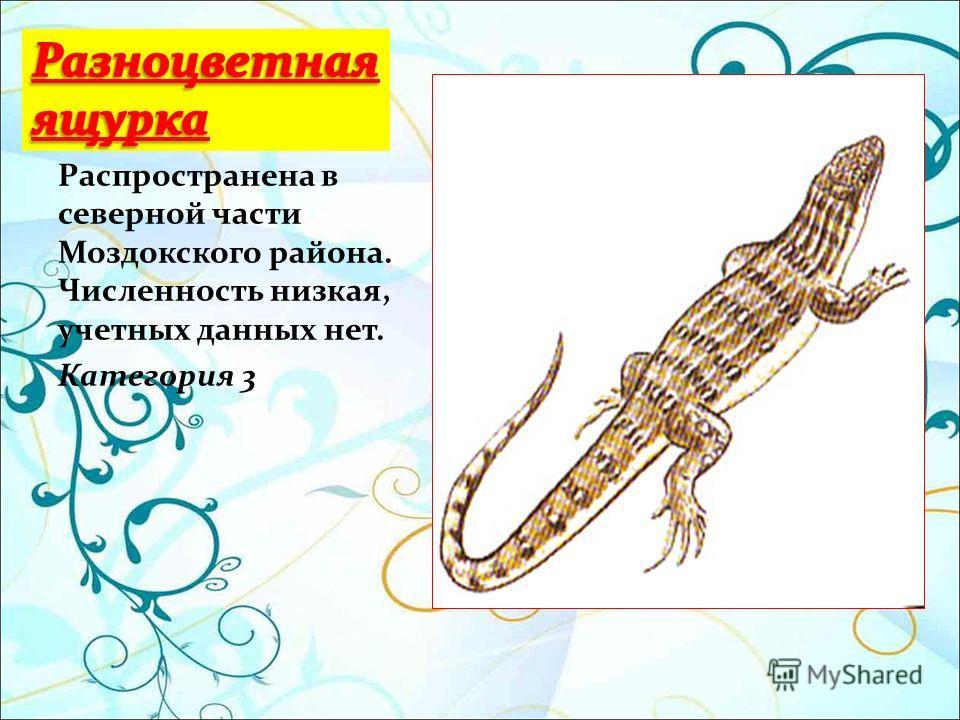 Распространена в северной части Моздокского района. Численность низкая, учетных данных нет. Категория 3