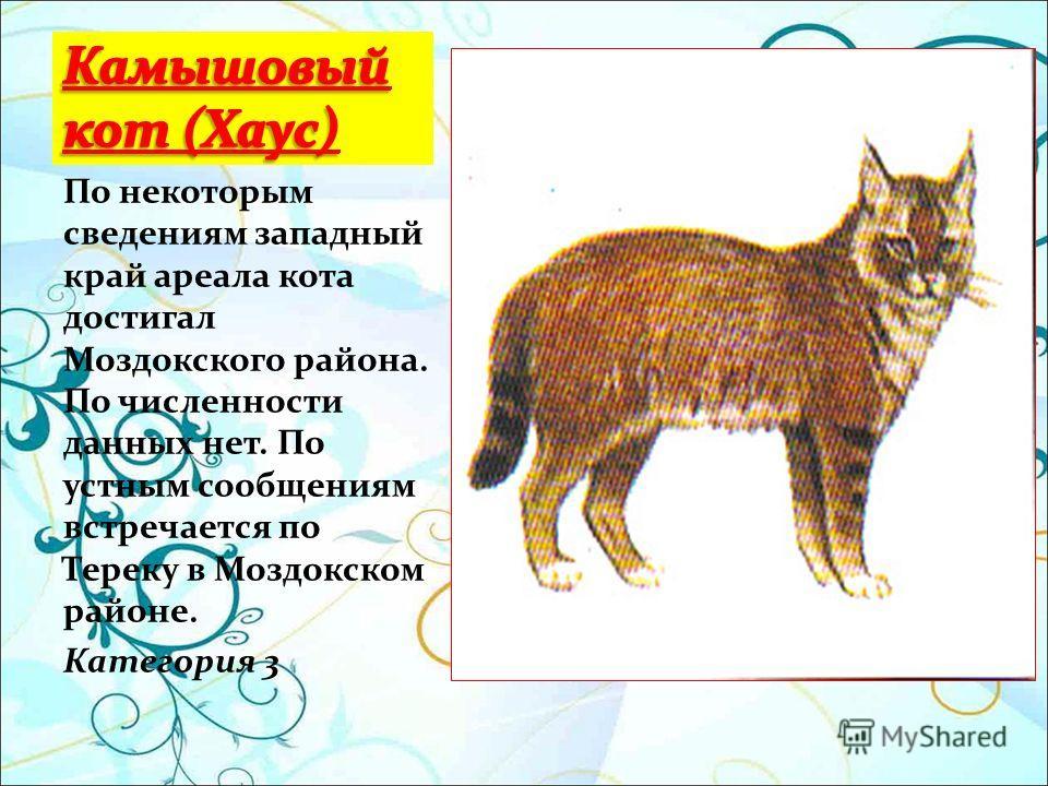 По некоторым сведениям западный край ареала кота достигал Моздокского района. По численности данных нет. По устным сообщениям встречается по Тереку в Моздокском районе. Категория 3