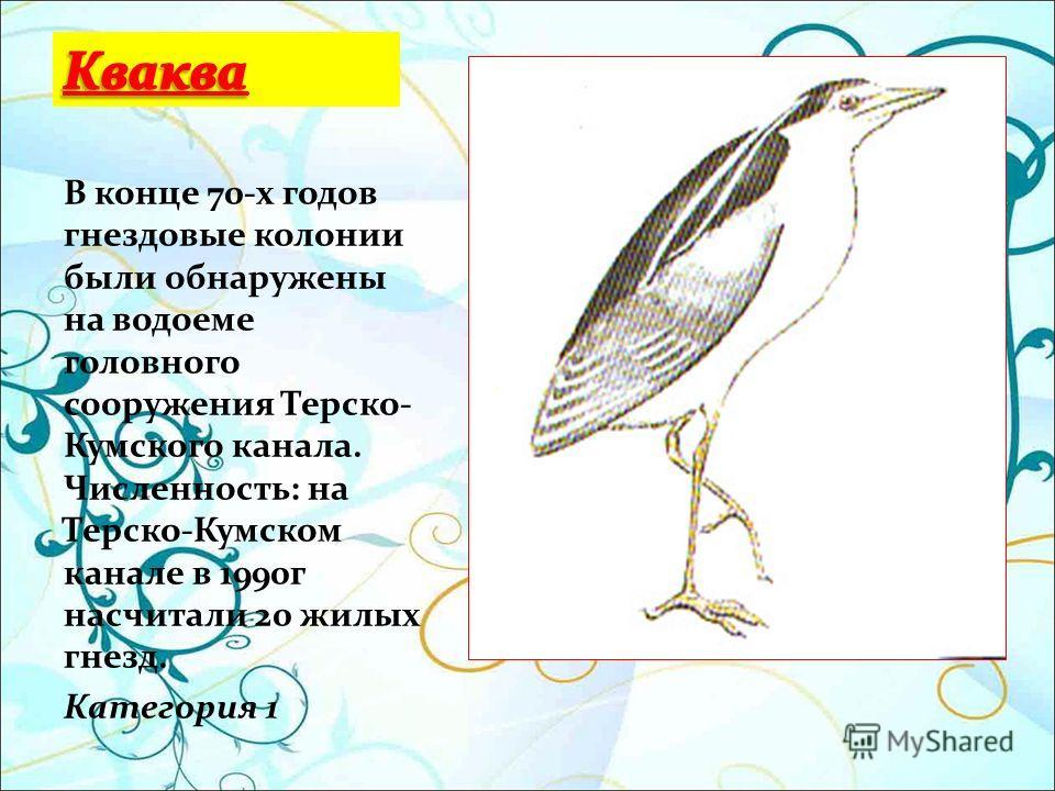 В конце 70-х годов гнездовые колонии были обнаружены на водоеме головного сооружения Терско- Кумского канала. Численность: на Терско-Кумском канале в 1990г насчитали 20 жилых гнезд. Категория 1