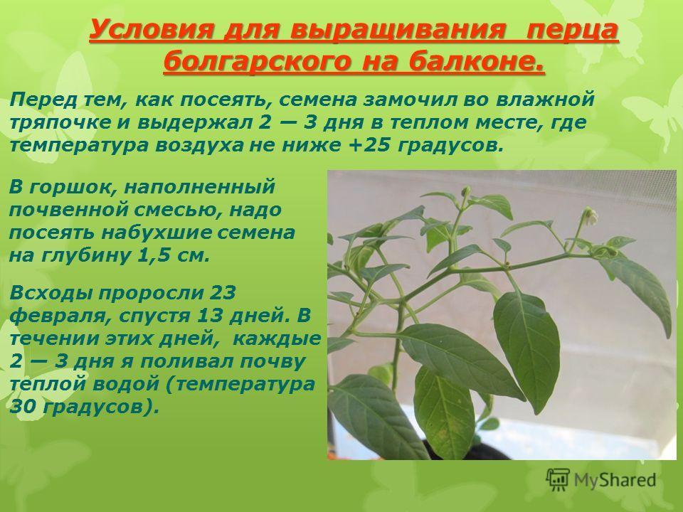 Условия для выращивания перца болгарского на балконе. Перед тем, как посеять, семена замочил во влажной тряпочке и выдержал 2 3 дня в теплом месте, где температура воздуха не ниже +25 градусов. В горшок, наполненный почвенной смесью, надо посеять наб