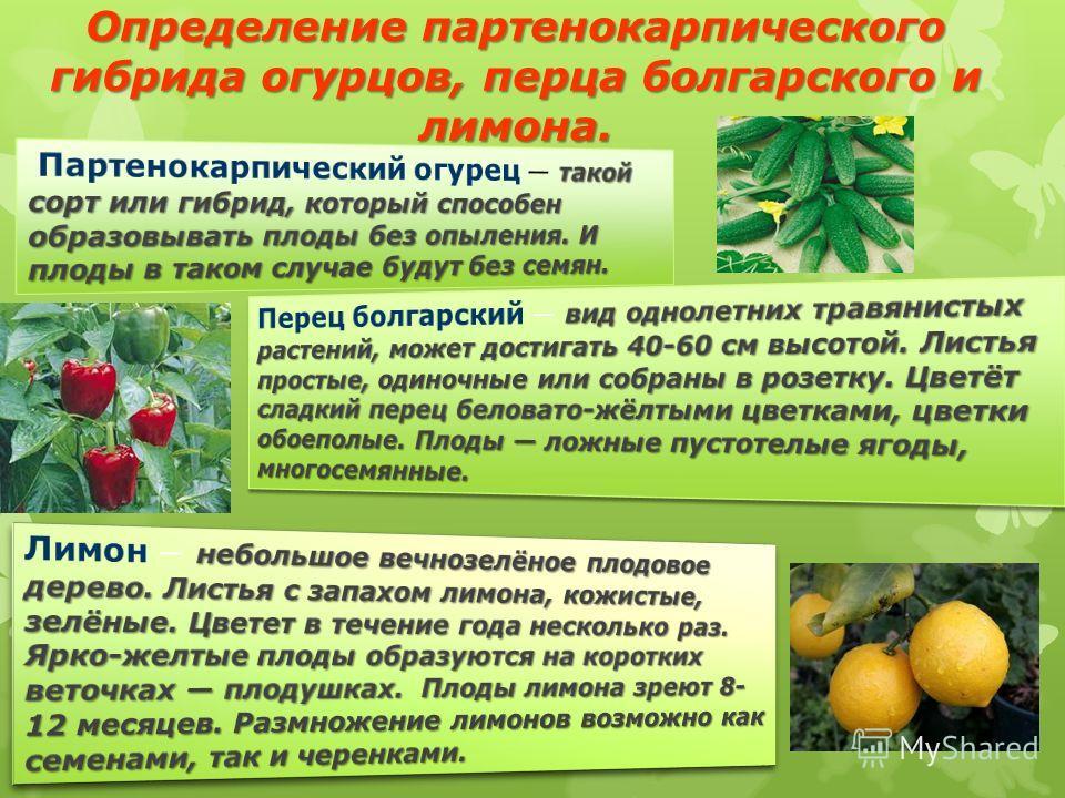 Определение партенокарпического гибрида огурцов, перца болгарского и лимона.