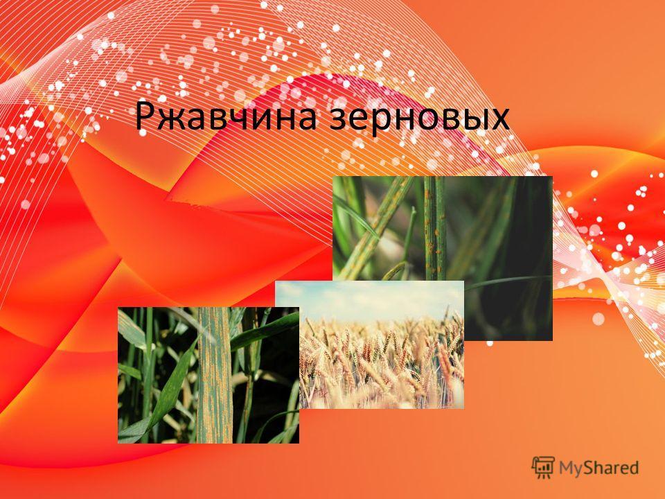 Ржавчина зерновых